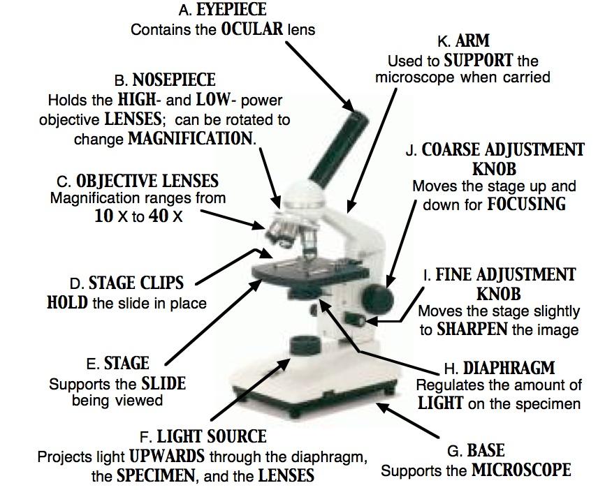 Parts Of A Microscope Tessshaheenmicroscopy